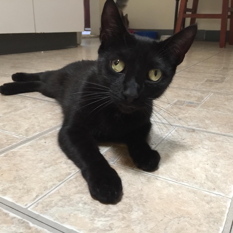 Mallory-Knox-Babycat.jpg